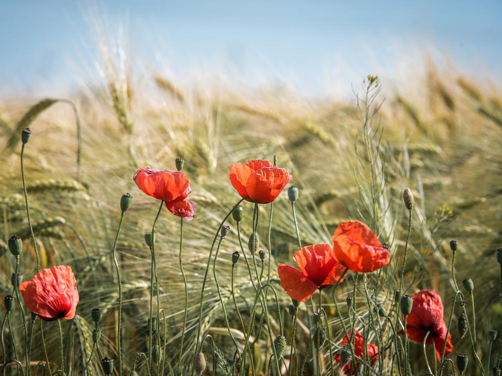 Hoopvol geluid over toekomstige landbouw bij Kring-loop