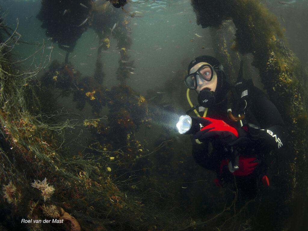 Duiker in de deltawateren  1 (Foto: Roel van der Mast)