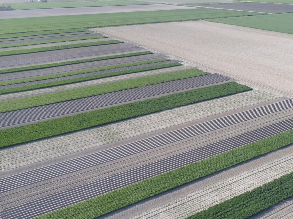 Naar een toekomstbestendige landbouw in Zeeland: Strokenteelt