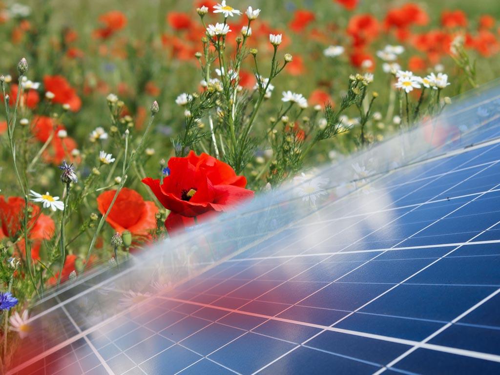 Natuur en landschap verdienen volwaardige plek in de regionale energiestrategieën