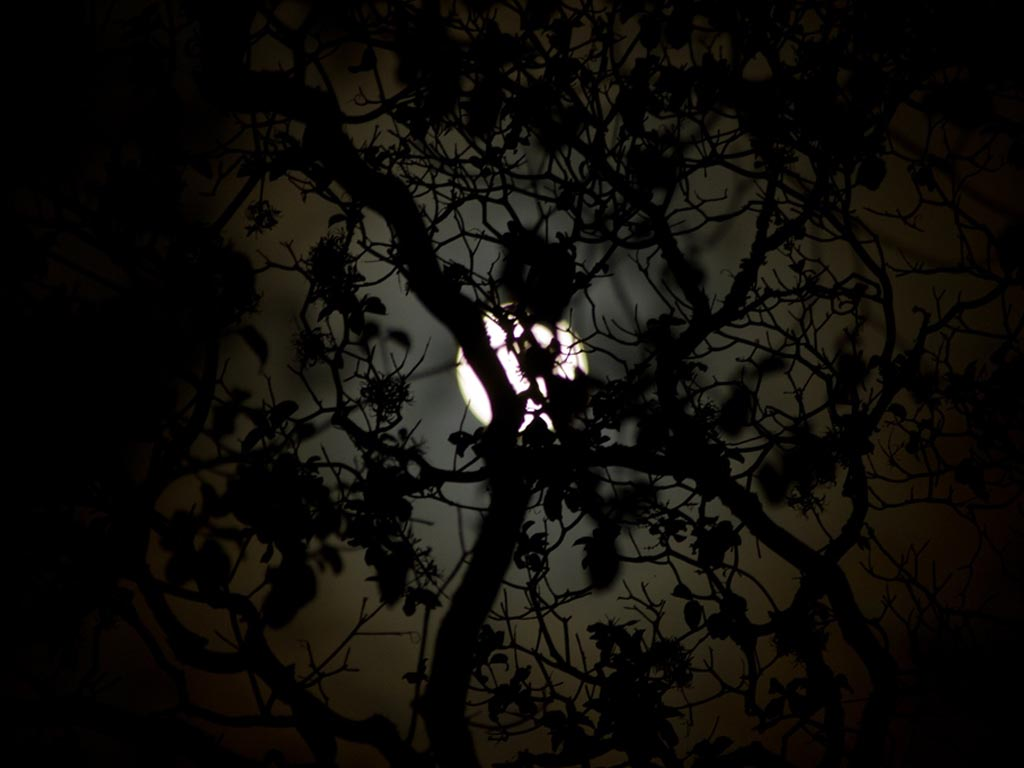 Meldpunt lichthinder: Mag het licht uit