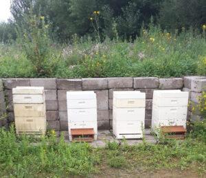 Foto bijenkasten Beeomonitoring
