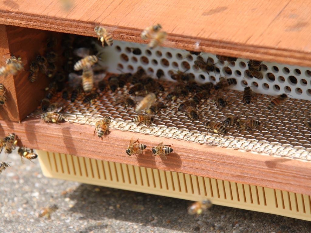 Samen werken aan verbetering van natuur in de Westerschelde met Beeomonitoring