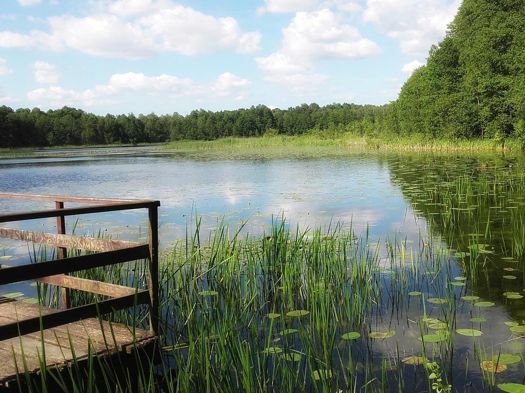Schoner water kan alleen met strenger mestbeleid